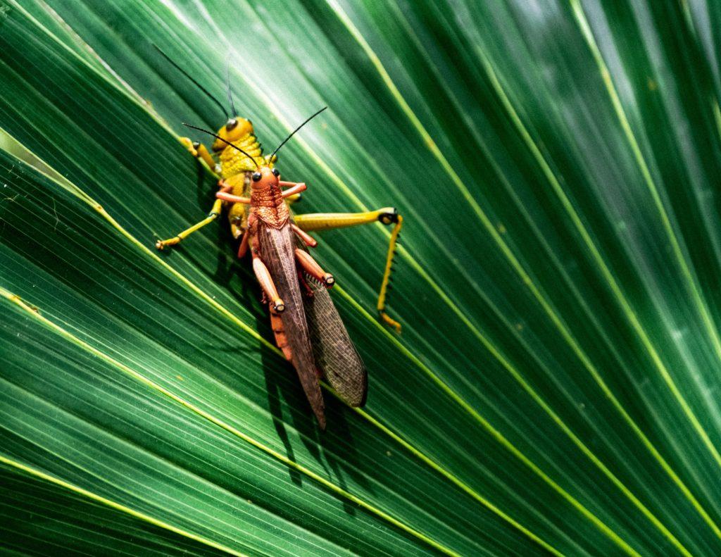 これから伸びしろ 高い 業界 昆虫食