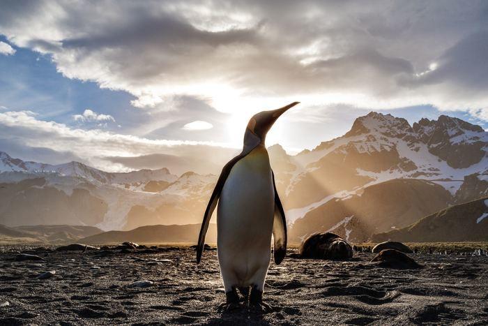 ファーストペンギン 行動力