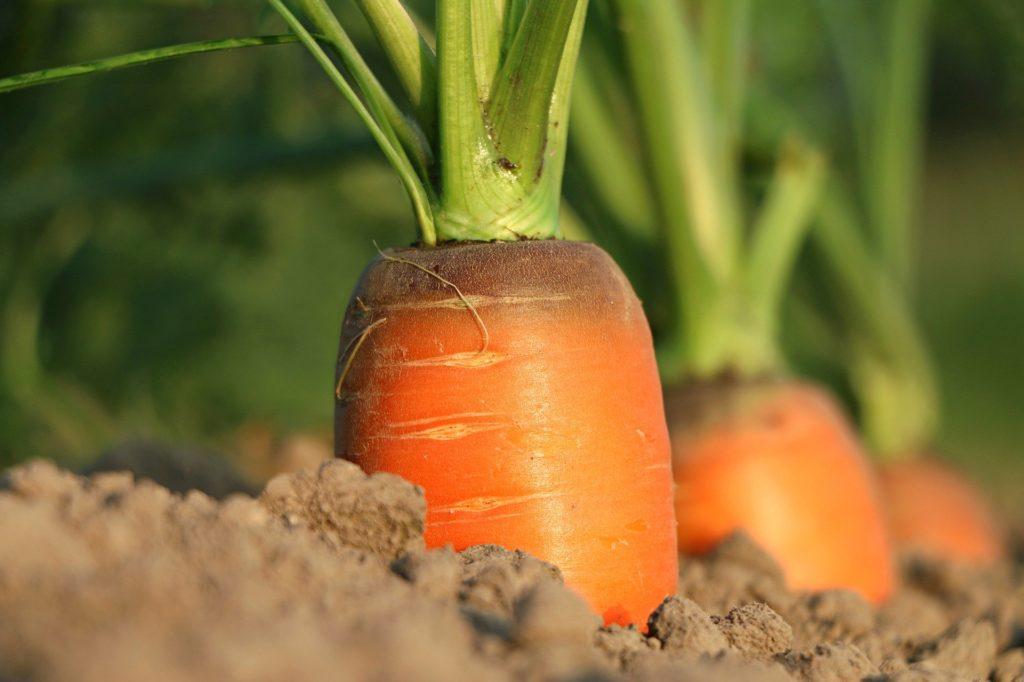 ビジネス 農業 似ている