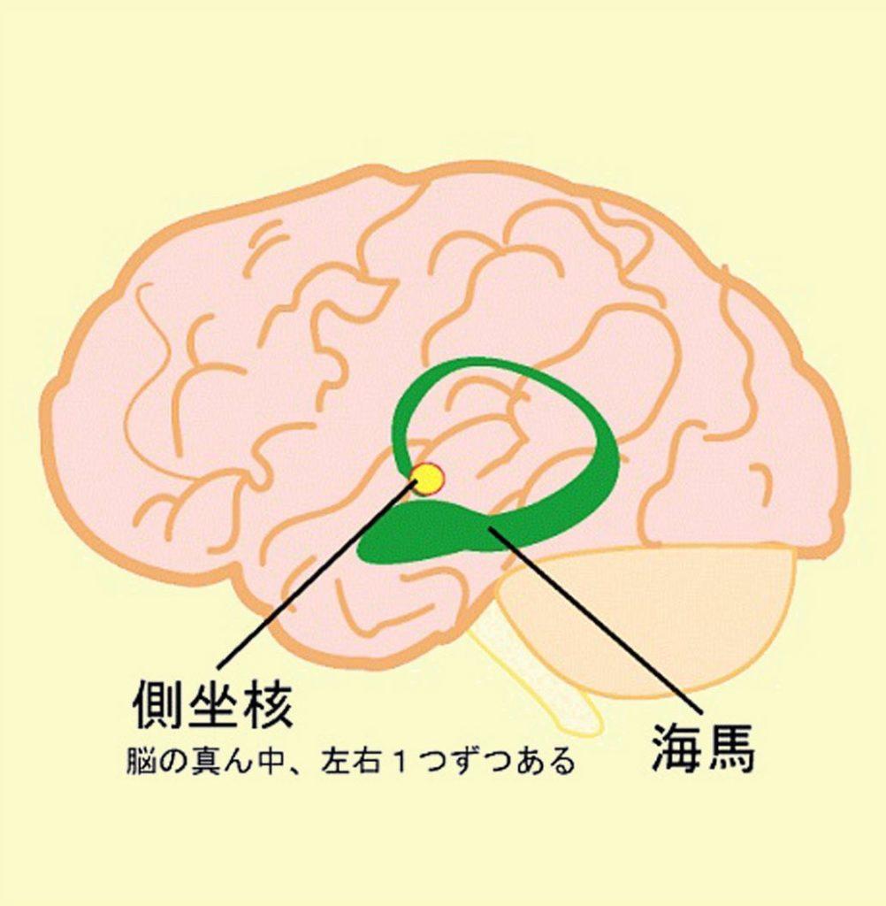 側座核 ドーパミン